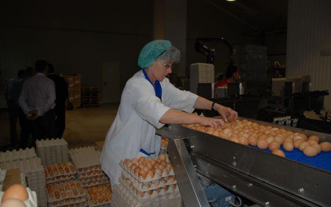 De ce este benefic să consumăm zilnic ouă