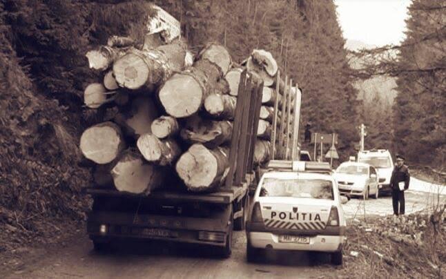 INSPECTORUL PĂDURII: Aplicație pentru reclamarea transporturilor ilegale de lemn