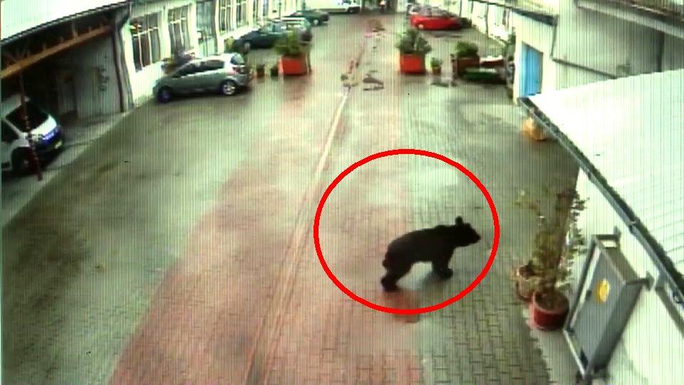 Noi imagini care arată că ursul de la Sibiu ar fi pus în pericol viața unei femei