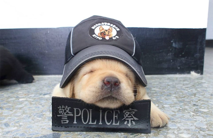 Aceștia sunt ofițerii de poliție care au cucerit internetul! Sunt adorabili