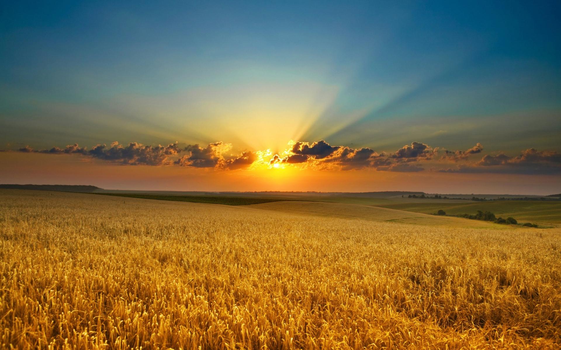 În circa 10 ani, fermele din România nu vor mai avea nevoie de angajați pe care și acum îi găsesc cu dificultate