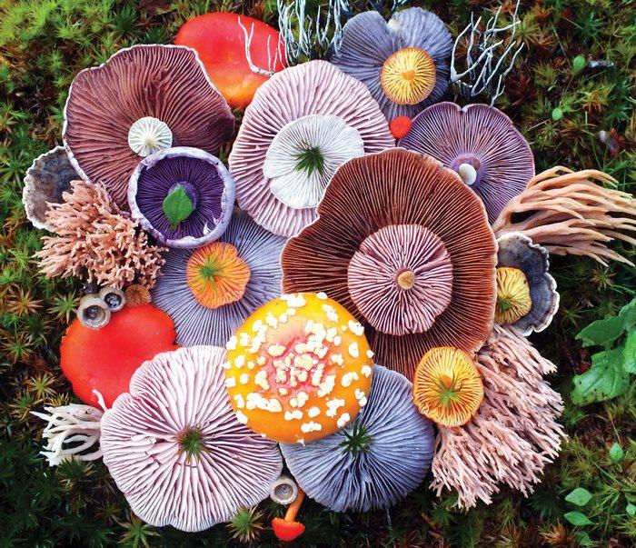 FOTOGALERIE Frumusețea magică a ciupercilor sălbatice! Un artist a uimit internetul cu lucrările sale