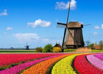 Alertă de călătorie în Olanda