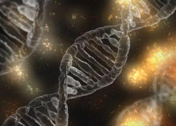 Care sunt animalele – și chiar fructele – cu care ne asemănăm genetic. Proporția e semnificativă