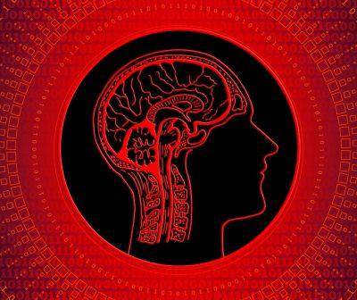 Legătura dintre intestine şi creier. Până acum nu s-a ştiut