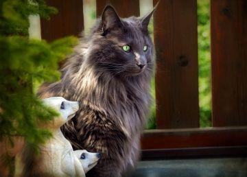 Ziua internațională a pisicilor. 5 exemplare spectaculoase
