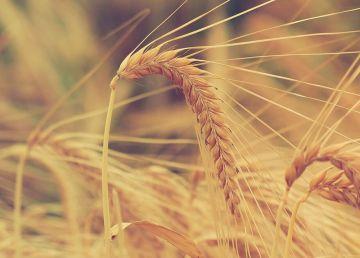 2018, un an agricol foarte bun, dar care ne-a prins nepregătiți
