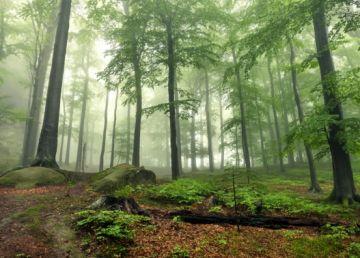 De câţi copaci avem nevoie pentru oxigenul zilnic necesar unui singur om