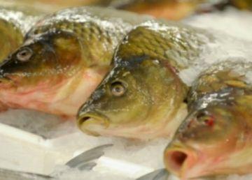 UPDATE. 30 de tone de peşte infestat cu metale grele, confiscat în România. O fabrică din Ploieşti a procesat şi vândut peşte contaminat