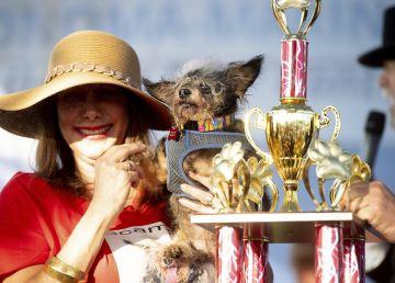 FOTO. Cine este cel mai urât câine din lume? 19 patrupede au participat la competiţia din California