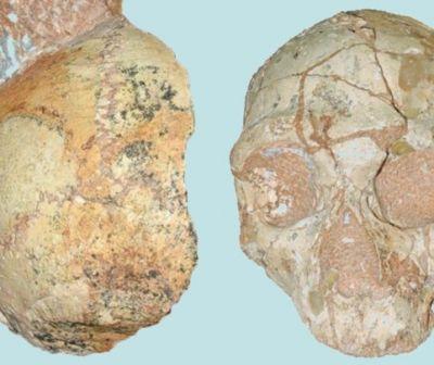 Apidima 1, cel mai vechi Homo Sapiens descoperit în afara Africii