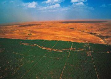 """""""Marele Zid Verde African"""", proiectul care ar putea salva Terra de la deşertificare. O utopie?"""