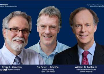 Doi cercetători britanici și unul american, câștigătorii Premiului Nobel pentru Medicină pe 2019