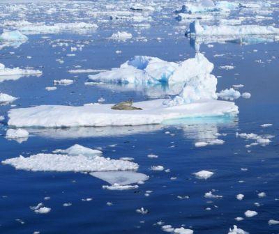 STUDIU. Decarbonizarea atmosferei ar putea salva gheaţa din Antarctica
