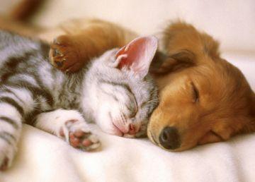 STUDIU. Persoanele infectate cu COVID-19 trebuie să se distanțeze și de animalele de companie? Pisicile, cele mai vulnerabile în fața virusului